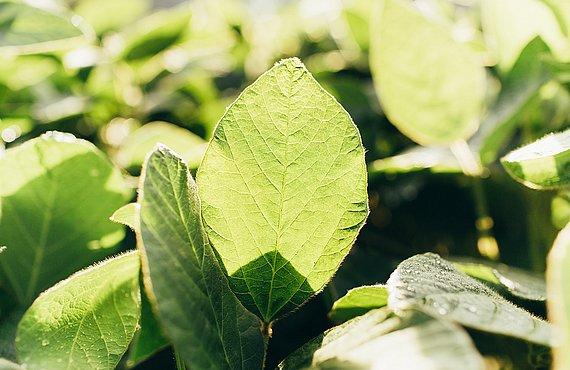 Was Wir Wollen 1000 Garten